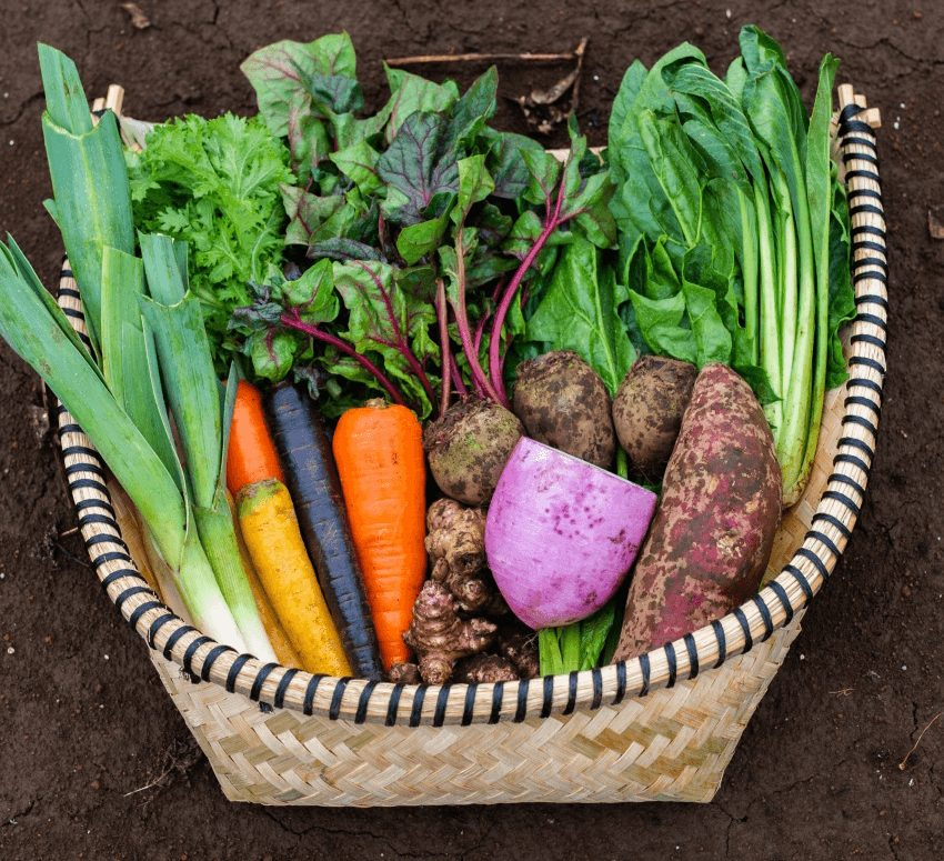 野菜セットL