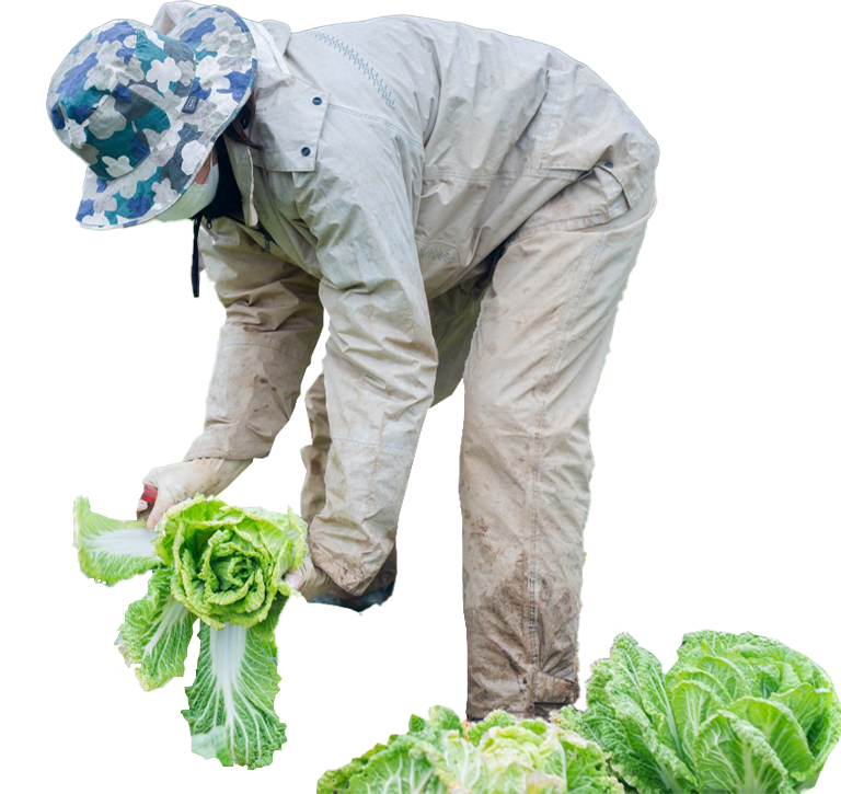 千葉県内農家に限定