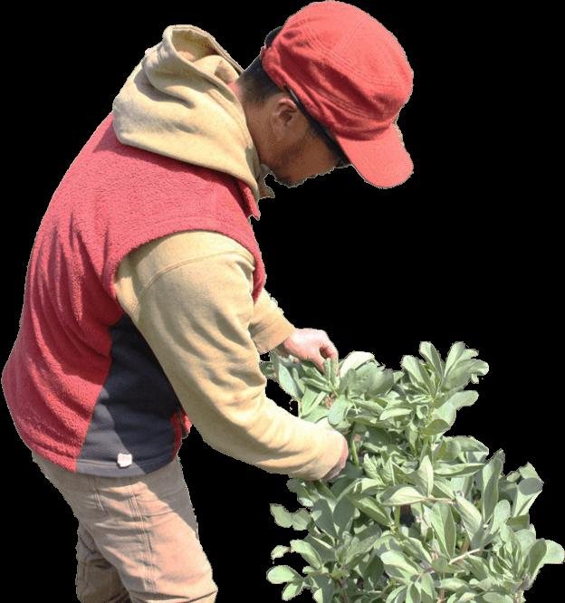 旬の野菜・珍しい野菜