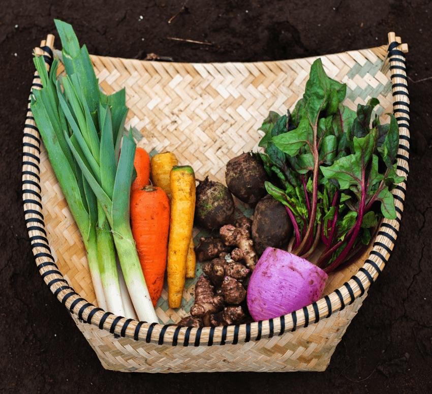 野菜セットS
